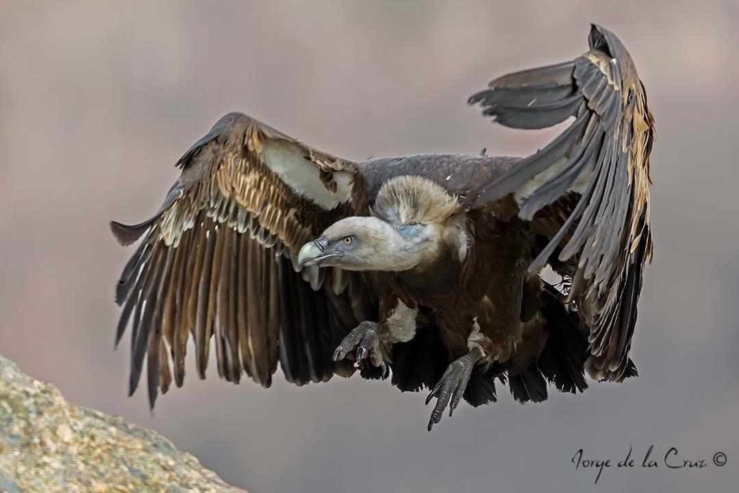 Hides Ornitológicos de Piornal